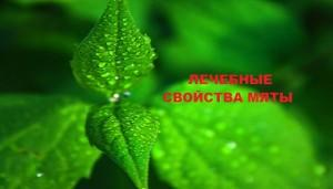 Лечебные свойства травы мята